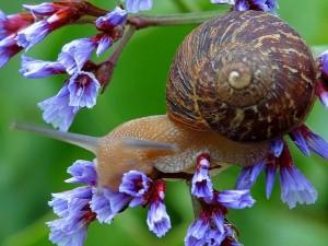 snail-on-flowers_w725_h544